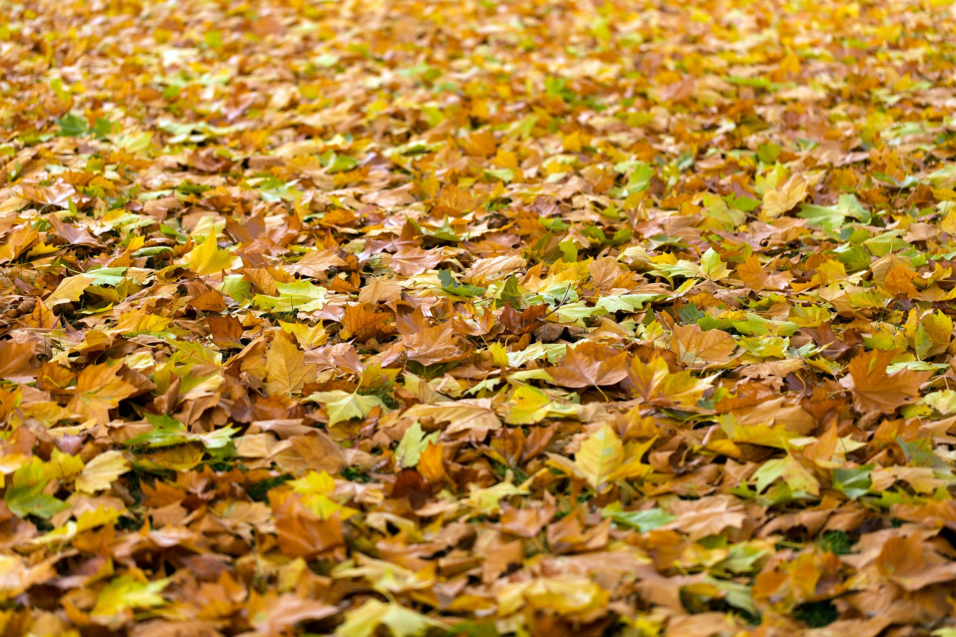 Reviews Of The Best Leaf Vacuums For Your Garden